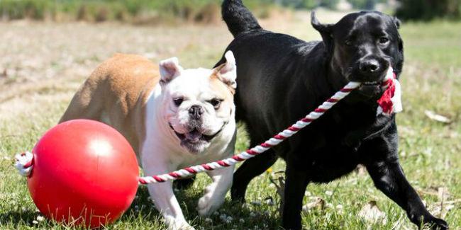 tuggo-dog-toys