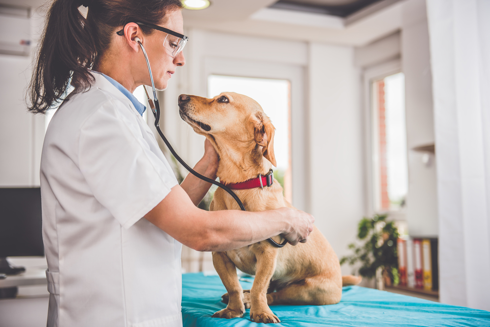 veterinary business loans